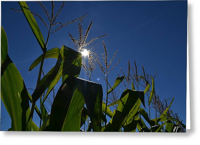 Sun Above The Corn  Greeting Card by Lyle Crump
