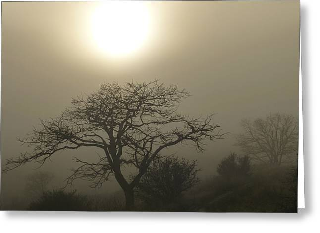 Sun And Fog Greeting Card