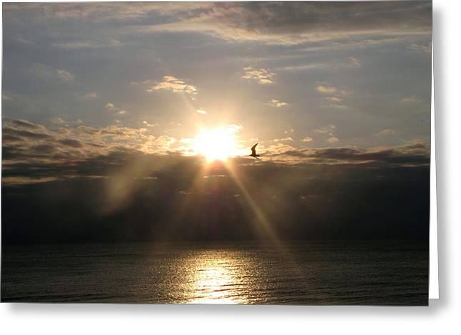 Greeting Card featuring the photograph Sun And Gull by Melissa Stoudt
