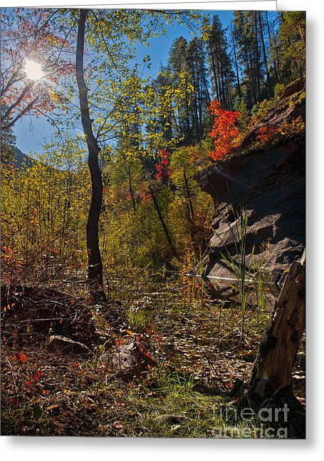 Sun And  The Tree Greeting Card by Brian Lambert