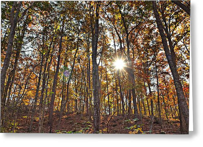 Sun Beams Dance In Autumn Trees Greeting Card