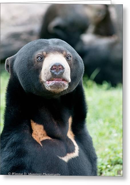Sun Bear Greeting Card