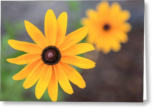 Sun Daisy Greeting Card