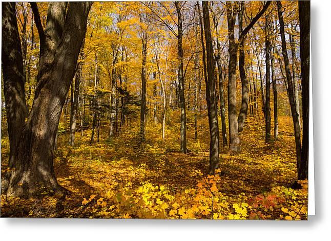 Sun Dappled Autumn Forest  Greeting Card by Georgia Mizuleva