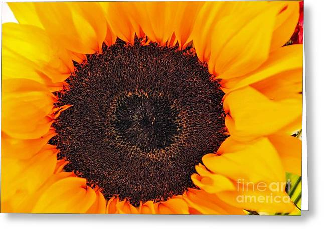 Sun Delight Greeting Card