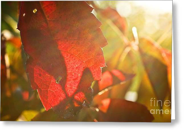 Greeting Card featuring the photograph Sun Fall by Julie Clements