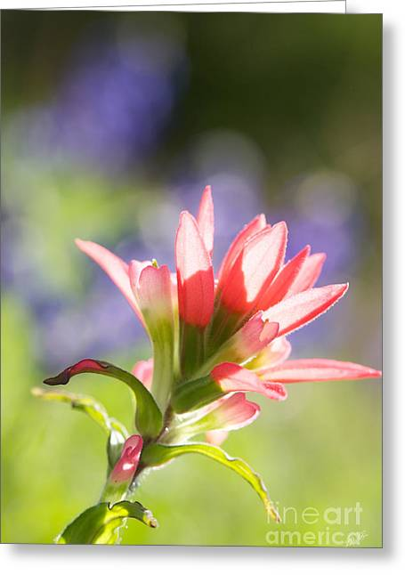 Sun Filled Paintbrush Greeting Card