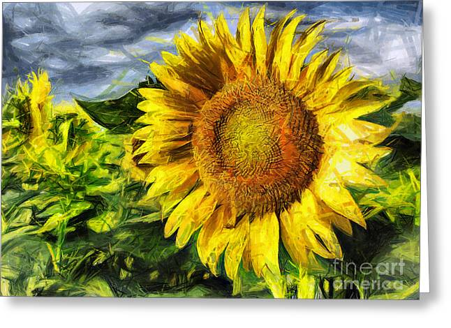 Sunflower Drawing  Greeting Card