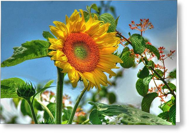 Sun Flower Greeting Card by Ed Roberts