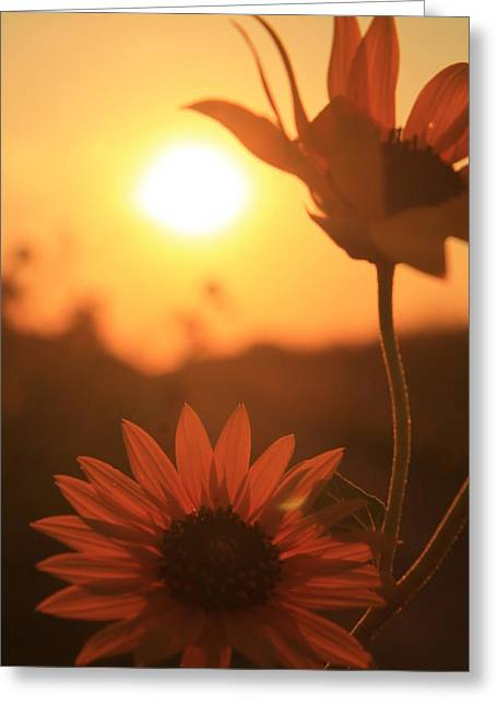 Sun Glow Greeting Card by Alicia Knust