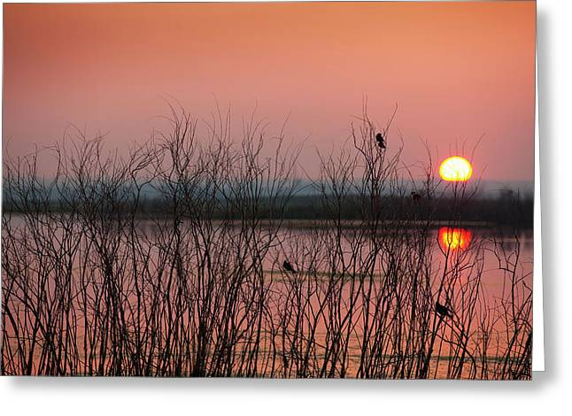 Sun Glowing In A Pink Sky At Sunset Greeting Card