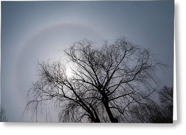 Sun Halo Bare Trees And Silver Gray Winter Sky Greeting Card