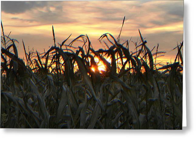 Sun In The Fields Greeting Card by Li   van Saathoff