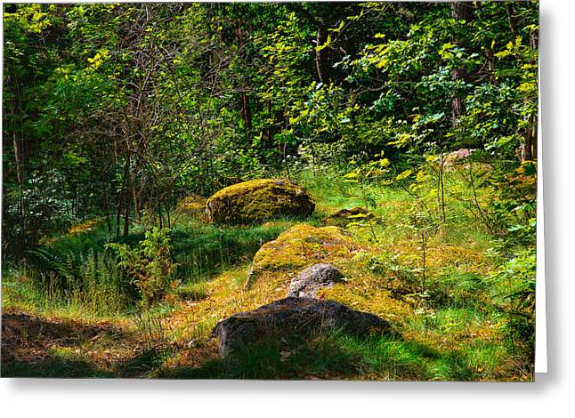 Greeting Card featuring the photograph Sun In The Forest by Leif Sohlman