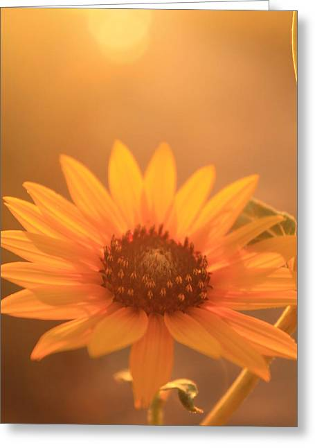Greeting Card featuring the photograph Sun Kissed by Alicia Knust