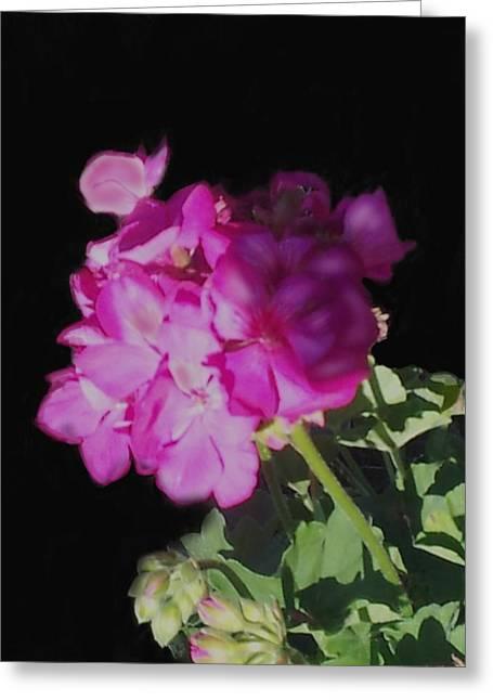 Sun Kissed Geranium  Greeting Card by Christine Fournier