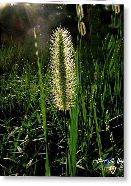Greeting Card featuring the photograph Sun-lite Grass Seed by Donna Brown