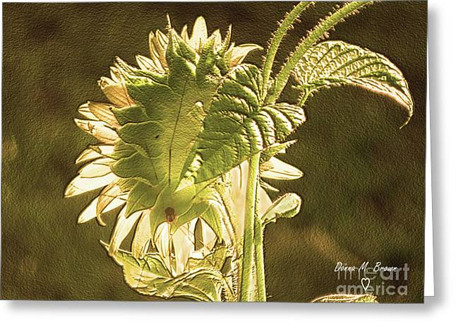 Greeting Card featuring the photograph Sun-lite Sunflowwer by Donna Brown