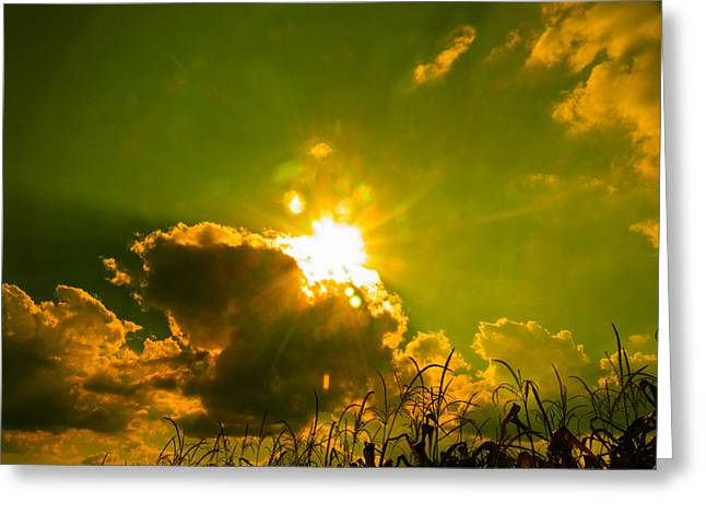 Sun Nest Greeting Card