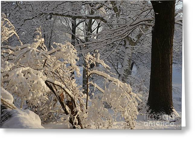 Greeting Card featuring the photograph Sun On Snow Covered Branches by Winifred Butler