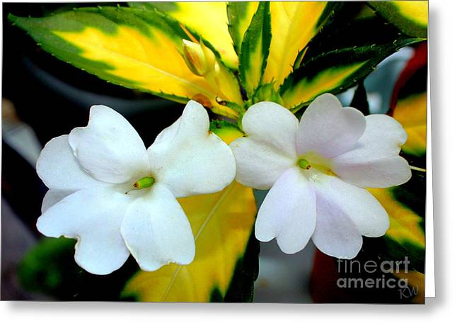 Sun Patiens Spreading White Variagated Greeting Card by Kathy  White