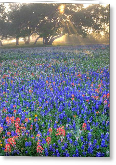 Sun Rays On Wildflowers Greeting Card by Eggers Photography
