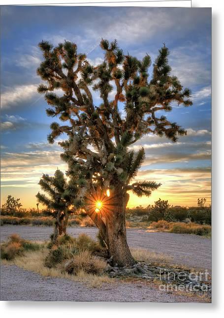 Sun Rays Through A Joshua Tree Greeting Card by Eddie Yerkish