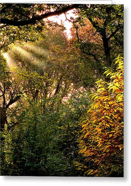 Greeting Card featuring the photograph Sun Rays by Trevor Chriss