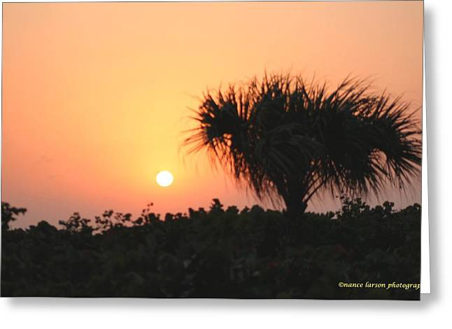 Sun Rise And Palm Tree Greeting Card by Nance Larson