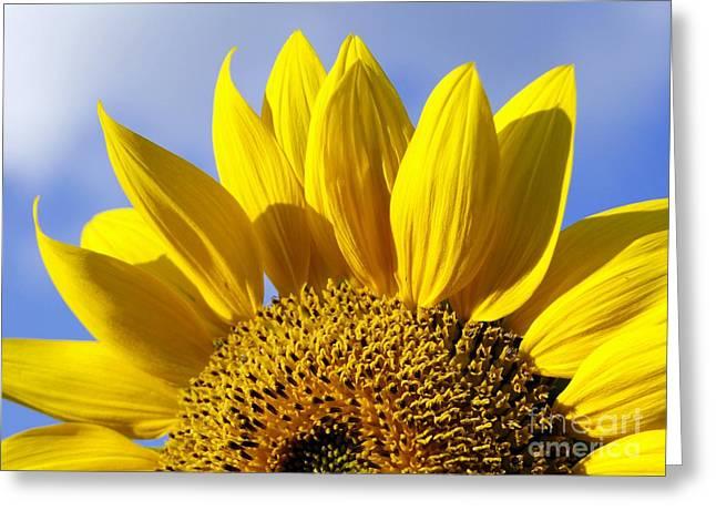 Sun Riser Greeting Card