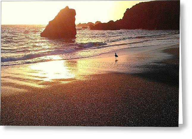 Sun Rock Bird Greeting Card