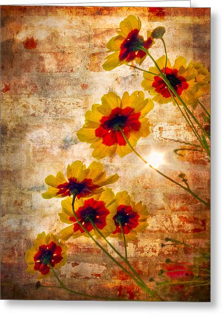 Sun Seekers Greeting Card by Debra and Dave Vanderlaan