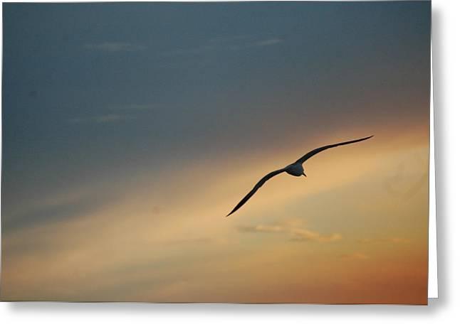 Sun Set And Segal Greeting Card by Ali ArtDesign