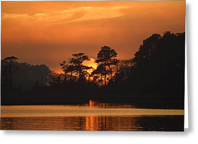 Greeting Card featuring the photograph Sun Setting In Trees by Bill Swartwout