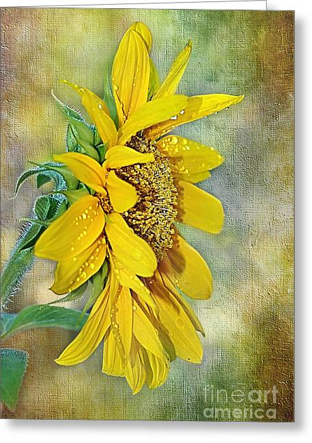 Sun Shower On Sunflower Greeting Card