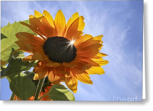 Sun Sparkle Greeting Card