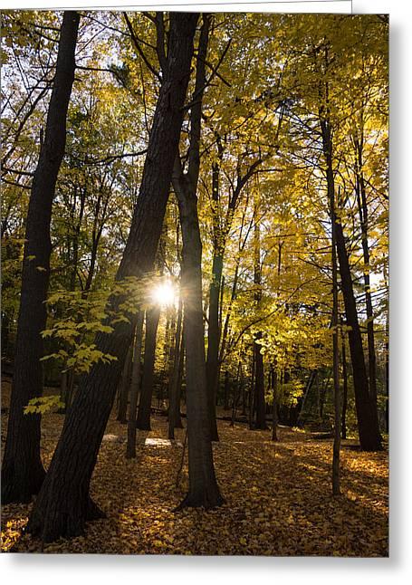 Sun Spotting Autumn - A Peaceful Forest In The Fall Greeting Card by Georgia Mizuleva