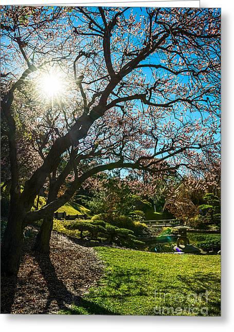 Sun Star Blossom Greeting Card