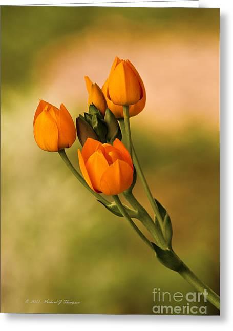 Sun Star Flower Greeting Card