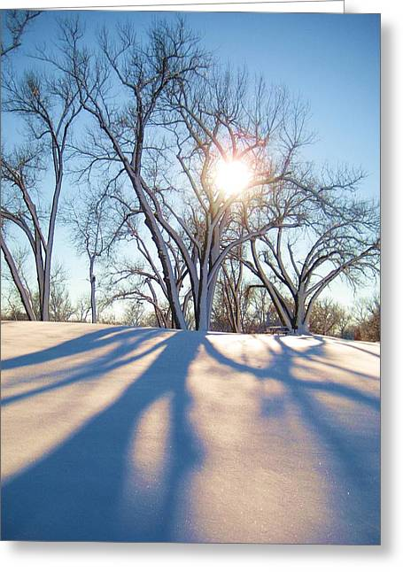 Sun Through Snow Covered Trees Greeting Card by Alicia Knust