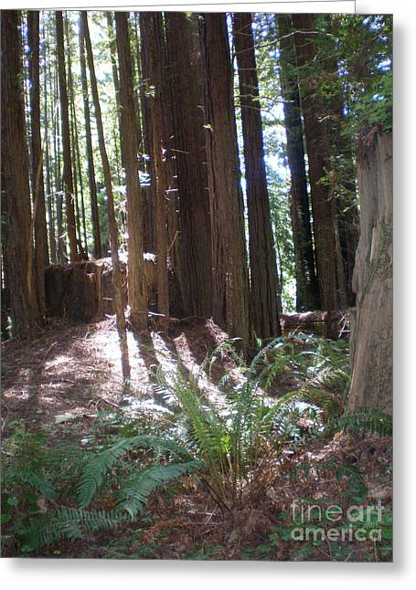Sun Through The Sequoias Greeting Card by Suzanne McKay