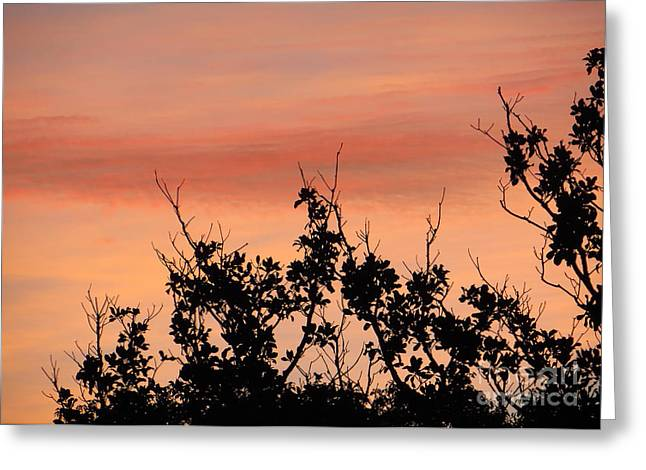 Greeting Card featuring the photograph Sun Up Silhouette by Joy Hardee