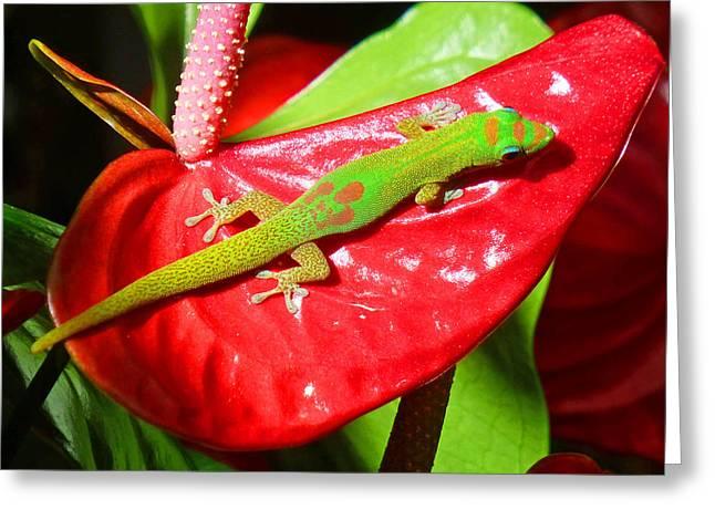 Sunbathing Gecko Greeting Card