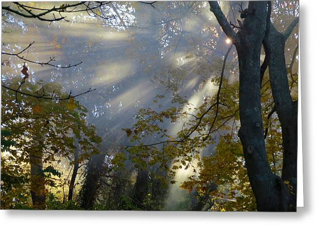 Greeting Card featuring the photograph Sunbeam Morning by Dianne Cowen