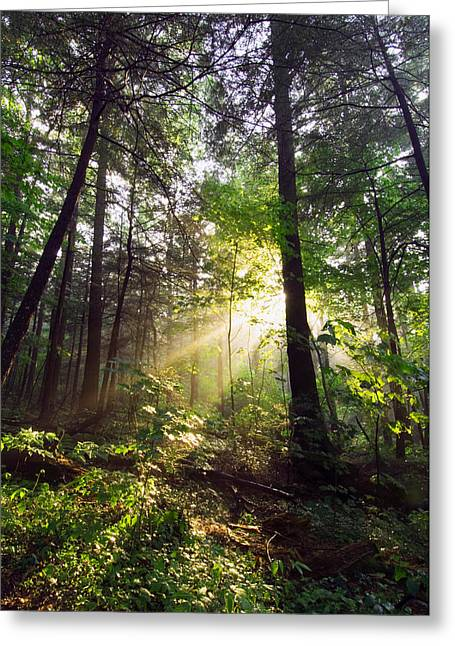 Sunbeams In Dense Forest, Great Smoky Greeting Card by Panoramic Images
