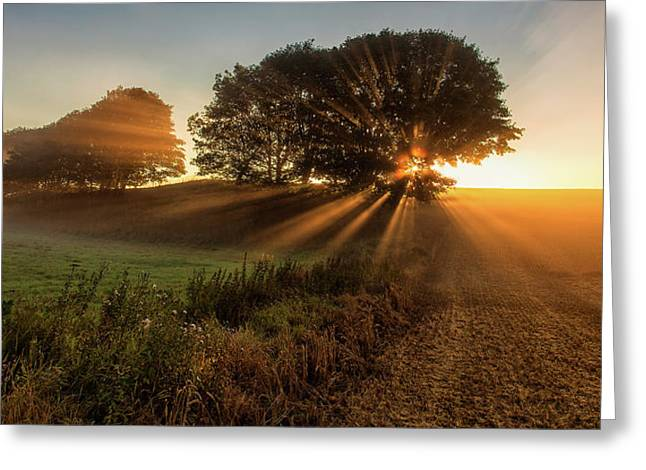 Sunbeams Greeting Card