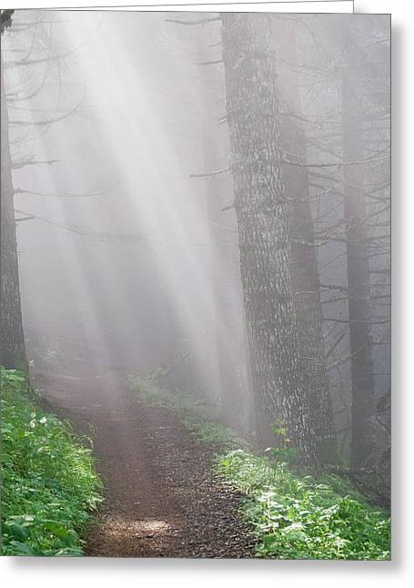 Sunbeams Through The Foggy Forest Onto Greeting Card by Robert L. Potts
