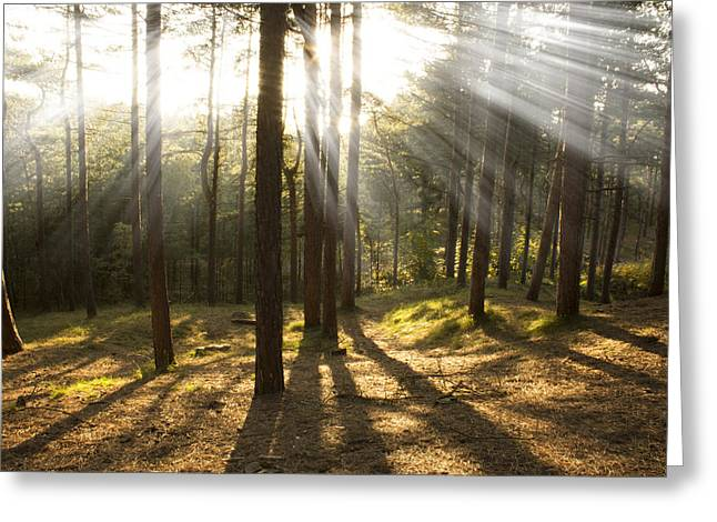 Sunbeams Through The Trees Greeting Card by Paul Madden