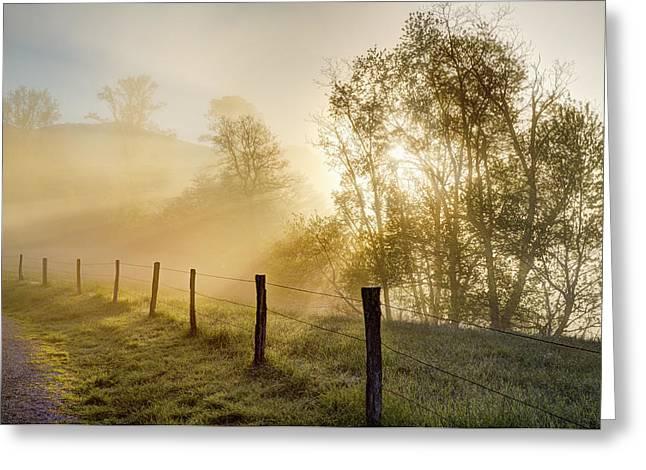 Sunbeams Through Trees At Sunrise Greeting Card