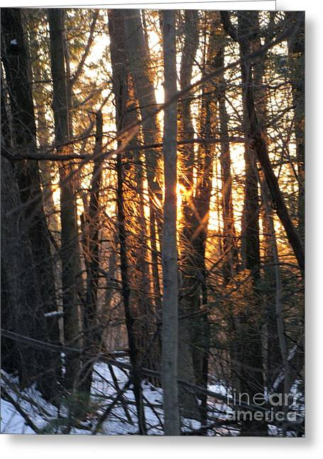 Greeting Card featuring the photograph Sunblaze-1 by Melissa Stoudt